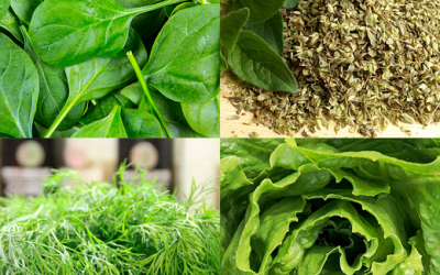 The Hidden Ancient Uses of Your Favorite Everyday Greens