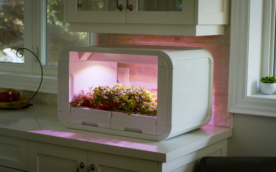 Indoor Gardening With tinyFarm, Everything you Need to Know